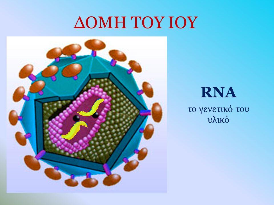 ΔΟΜΗ ΤΟΥ ΙΟΥ RNA το γενετικό του υλικό