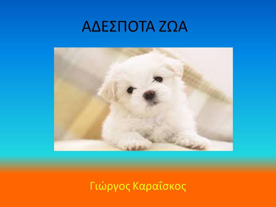 Τι είναι τα Αδέσποτα; Τα αδέσποτα ζώα είναι αυτά που τα παρατάνε τα αφεντικά τους, επειδή τα βαριούνται ή όταν γεννάνε μικρά τα εγκαταλείπουν γιατί δεν μπορούν να τα συντηρήσουν..