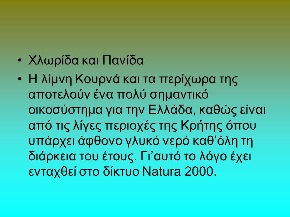 Χλωρίδα και Πανίδα Η λίμνη Κουρνά και τα περίχωρα της αποτελούν ένα πολύ σημαντικό οικοσύστημα για την Ελλάδα, καθώς είναι από τις λίγες περιοχές της