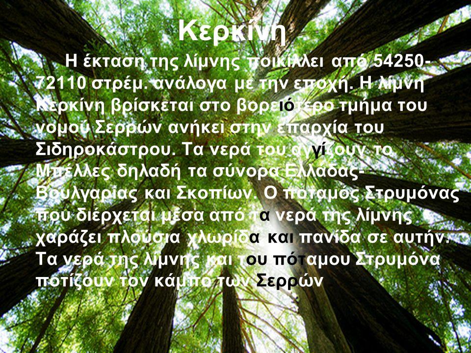 Η Κερκίνη προστατεύεται από τη σύμβαση Ραμσαρ και αποτελεί περιοχή του Ευρωπαϊκού Δικτύου «Φύση 2000».