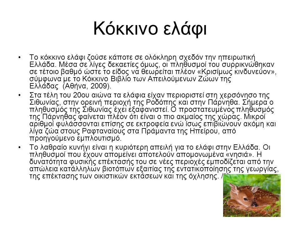 Κόκκινο ελάφι Το κόκκινο ελάφι ζούσε κάποτε σε ολόκληρη σχεδόν την ηπειρωτική Ελλάδα. Μέσα σε λίγες δεκαετίες όμως, οι πληθυσμοί του συρρικνώθηκαν σε