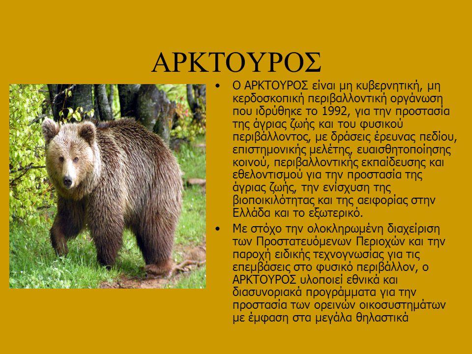 ΑΡΚΟΥΔΑ ΧΟΡΕΥΤΡΙΑ Ο ΑΡΚΤΟΥΡΟΣ έπειτα από δυναμικές παρεμβάσεις κατάφερε την εξάλειψη του φαινόμενου της αρκούδας χορεύτριας στην Ελλάδα ενώ εξακολουθεί να εργάζεται για την εξάλειψη της παράνομης αιχμαλωσίας στην ευρύτερη περιοχή των Βαλκανίων.