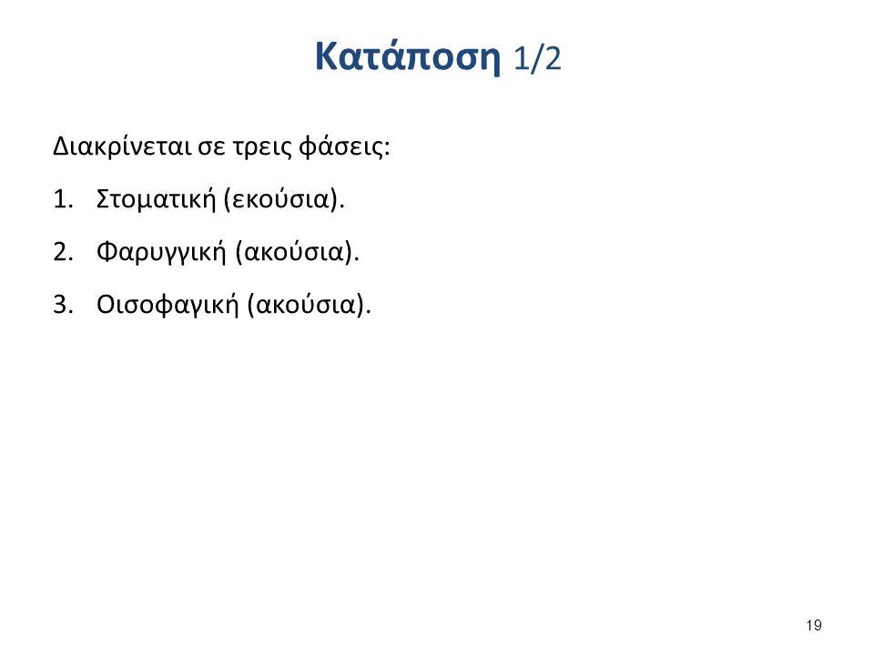 Κατάποση 1/2 Διακρίνεται σε τρεις φάσεις: 1.Στοματική (εκούσια). 2.Φαρυγγική (ακούσια). 3.Οισοφαγική (ακούσια). 19