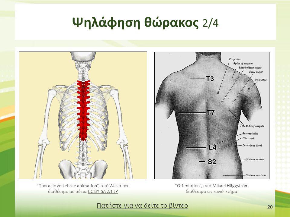 """20 Πατήστε για να δείτε το βίντεο """"Thoracic vertebrae animation"""", από Was a bee διαθέσιμο με άδεια CC BY-SA 2.1 JPThoracic vertebrae animationWas a be"""