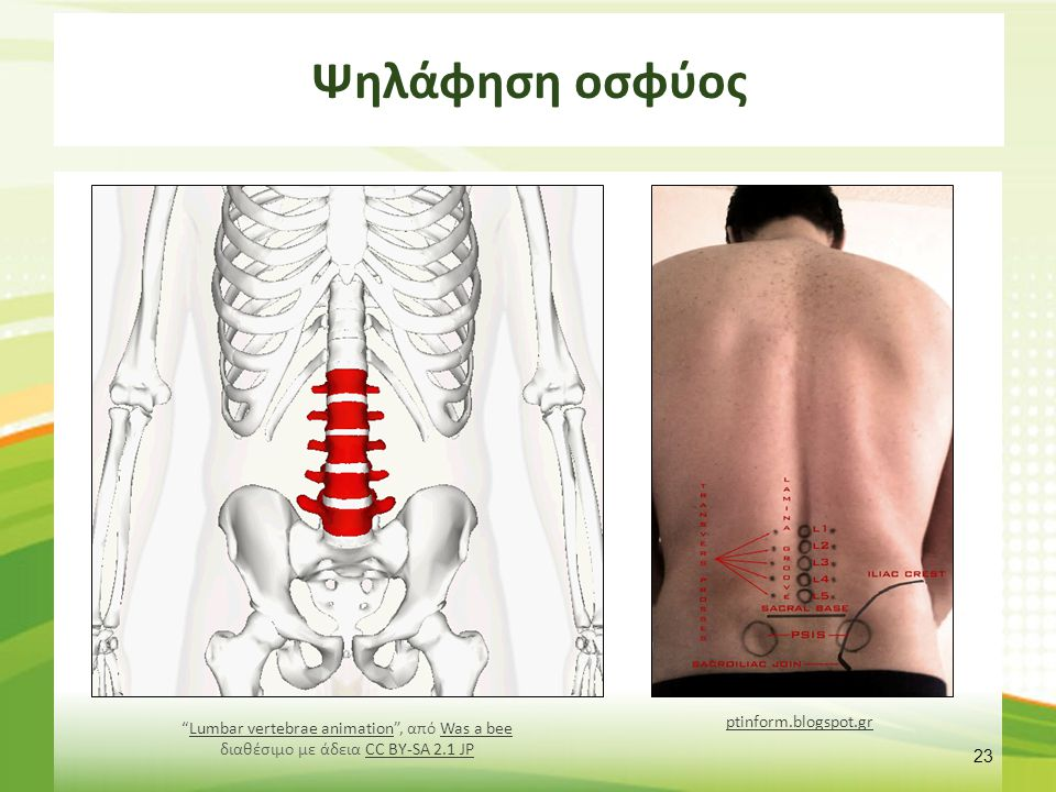 "Ψηλάφηση οσφύος 23 ptinform.blogspot.gr ""Lumbar vertebrae animation"", από Was a bee διαθέσιμο με άδεια CC BY-SA 2.1 JPLumbar vertebrae animationWas a"