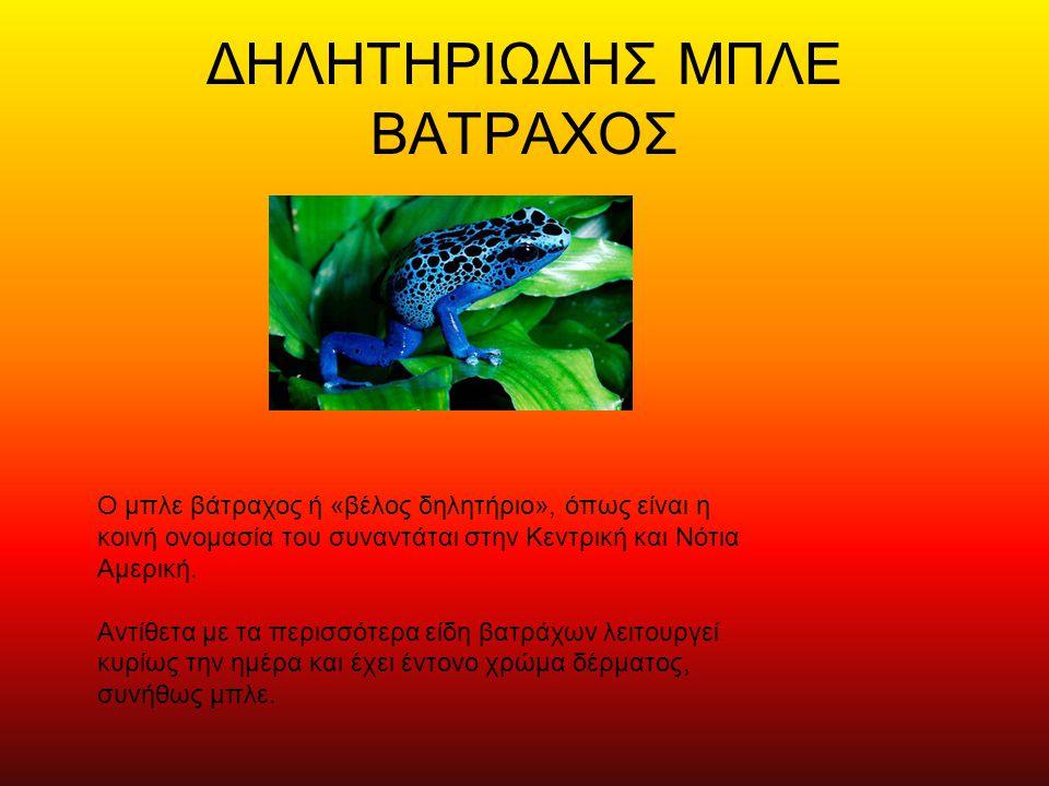 ΔΗΛΗΤΗΡΙΩΔΗΣ ΜΠΛΕ ΒΑΤΡΑΧΟΣ Ο μπλε βάτραχος ή «βέλος δηλητήριο», όπως είναι η κοινή ονομασία του συναντάται στην Κεντρική και Νότια Αμερική. Αντίθετα μ