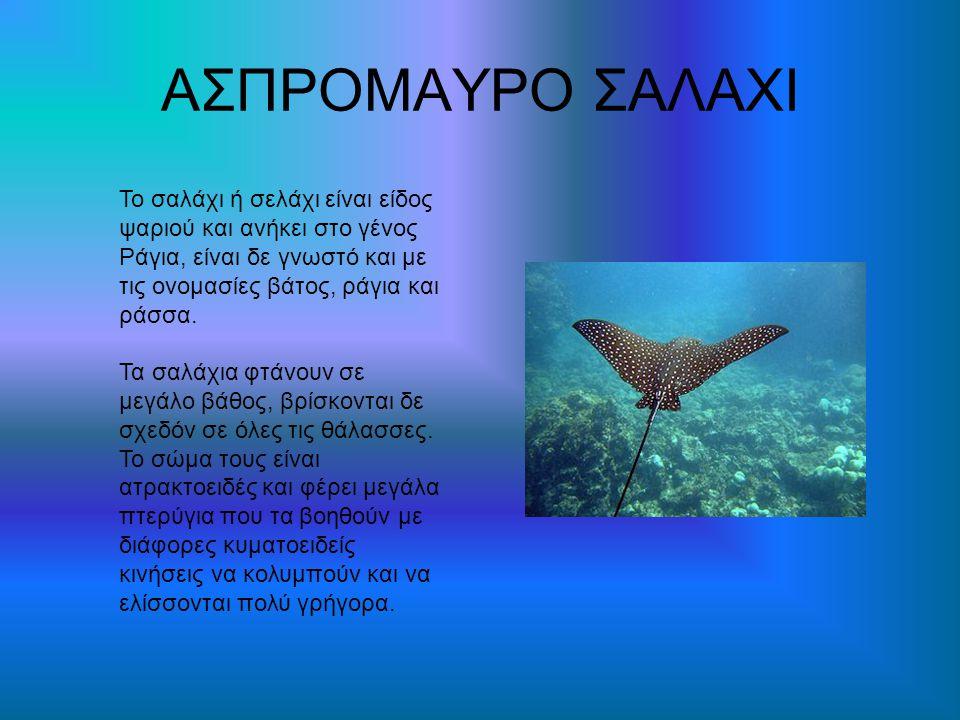 ΑΣΠΡΟΜΑΥΡΟ ΣΑΛΑΧΙ Το σαλάχι ή σελάχι είναι είδος ψαριού και ανήκει στο γένος Ράγια, είναι δε γνωστό και με τις ονομασίες βάτος, ράγια και ράσσα. Τα σα