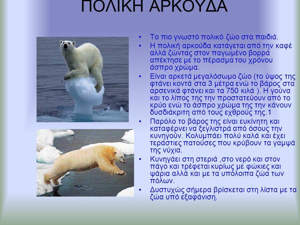 ΠΟΛΙΚΗ ΑΡΚΟΥΔΑ Το πιο γνωστό πολικό ζώο στα παιδιά. Η πολική αρκούδα κατάγεται από την καφέ αλλά ζώντας στον παγωμένο βορρά απέκτησε με το πέρασμα του