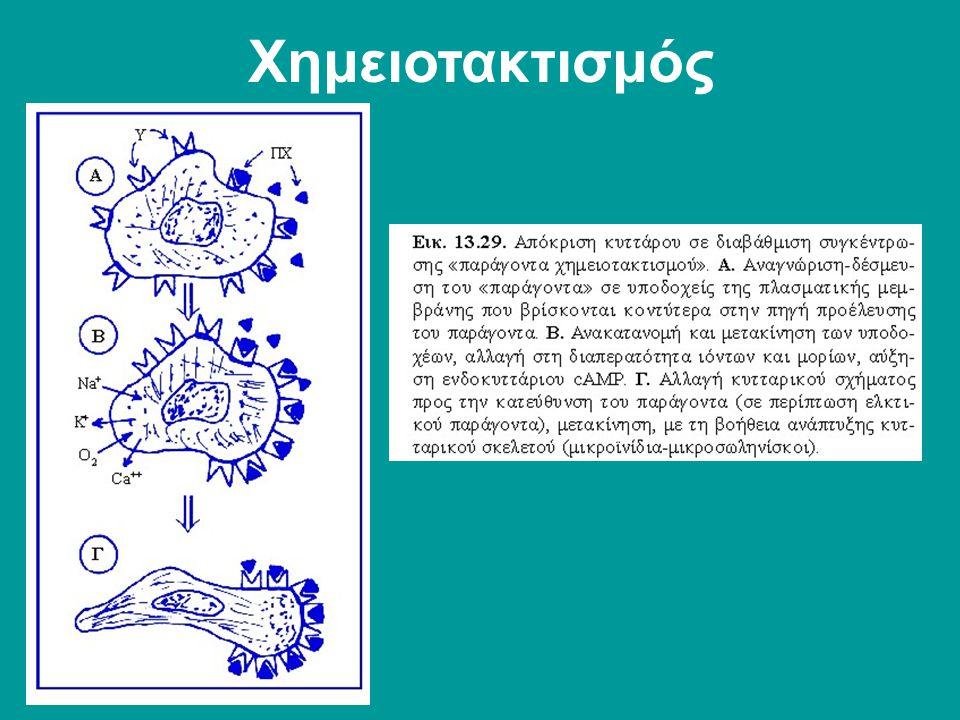 Χημειοτακτισμός