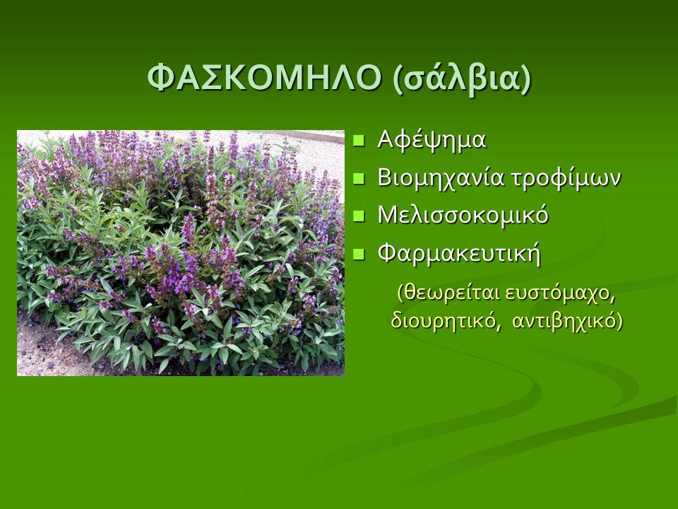 ΦΑΣΚΟΜΗΛΟ ( σάλβια ) Αφέψημα Βιομηχανία τροφίμων Μελισσοκομικό Φαρμακευτική (θεωρείται ευστόμαχο, διουρητικό, αντιβηχικό)