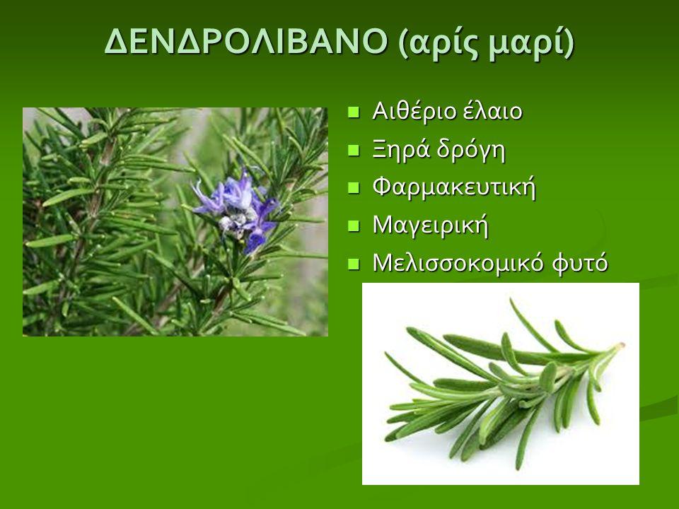 ΔΕΝΔΡΟΛΙΒΑΝΟ ( αρίς μαρί ) Αιθέριο έλαιο Ξηρά δρόγη Φαρμακευτική Μαγειρική Μελισσοκομικό φυτό