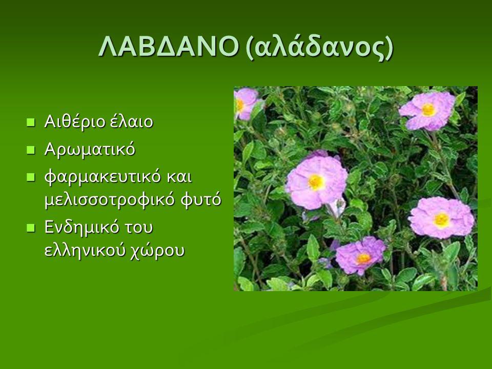 ΛΑΒΔΑΝΟ ( αλάδανος ) Αιθέριο έλαιο Αιθέριο έλαιο Αρωματικό Αρωματικό φαρμακευτικό και μελισσοτροφικό φυτό φαρμακευτικό και μελισσοτροφικό φυτό Ενδημικ