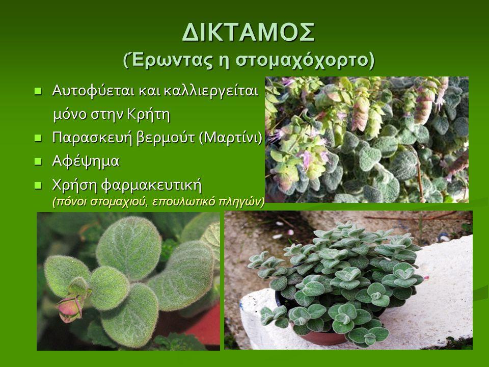 ΔΙΚΤΑΜΟΣ ( Έρωντας η στομαχόχορτο) Αυτοφύεται και καλλιεργείται Αυτοφύεται και καλλιεργείται μόνο στην Κρήτη μόνο στην Κρήτη Παρασκευή βερμούτ ( Μαρτί