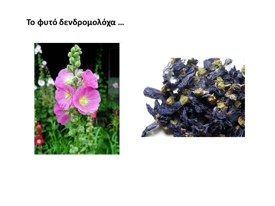 Το φυτό δενδρομολόχα …