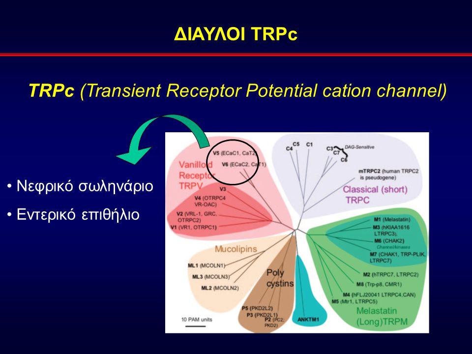ΔΙΑΥΛΟΙ TRPc TRPc (Transient Receptor Potential cation channel) Νεφρικό σωληνάριο Εντερικό επιθήλιο