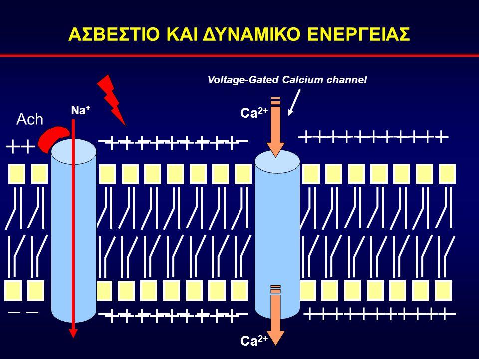 ΑΣΒΕΣΤΙΟ ΚΑΙ ΔΥΝΑΜΙΚΟ ΕΝΕΡΓΕΙΑΣ Voltage-Gated Calcium channel +++++++++++ − − − − Ach +++++++++ − − − − Na + − − − − +++++++++ Ca 2+ − − − − +++++++++++ ++ – –– –
