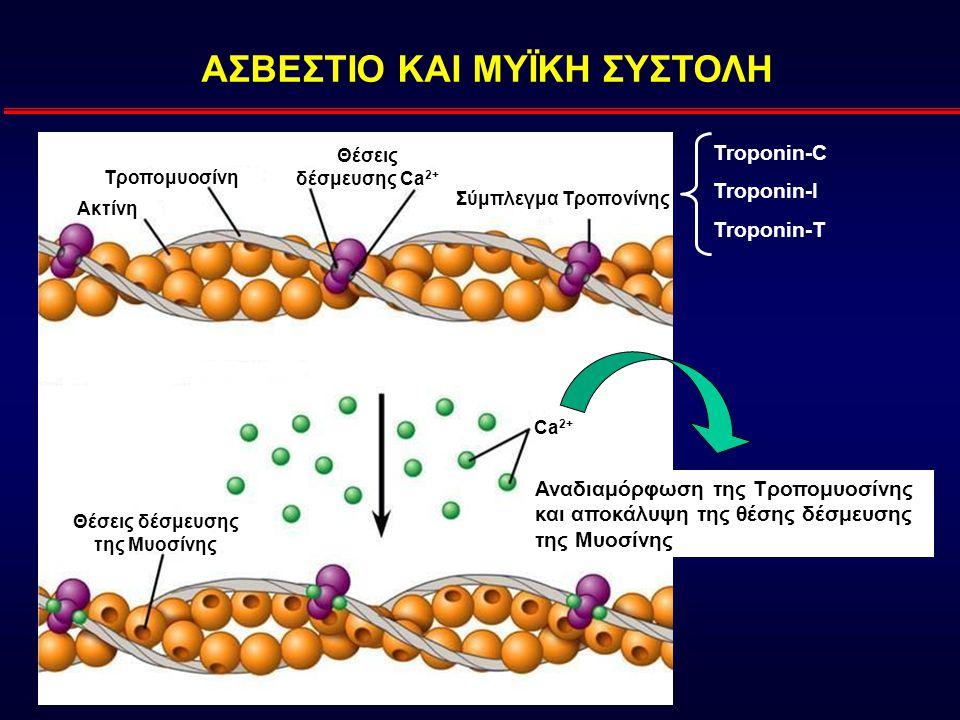 ΑΣΒΕΣΤΙΟ ΚΑΙ ΜΥΪΚΗ ΣΥΣΤΟΛΗ Θέσεις δέσμευσης της Μυοσίνης Σύμπλεγμα Τροπονίνης Θέσεις δέσμευσης Ca 2+ Τροπομυοσίνη Ακτίνη Ca 2+ Troponin-C Troponin-I Troponin-T Αναδιαμόρφωση της Τροπομυοσίνης και αποκάλυψη της θέσης δέσμευσης της Μυοσίνης