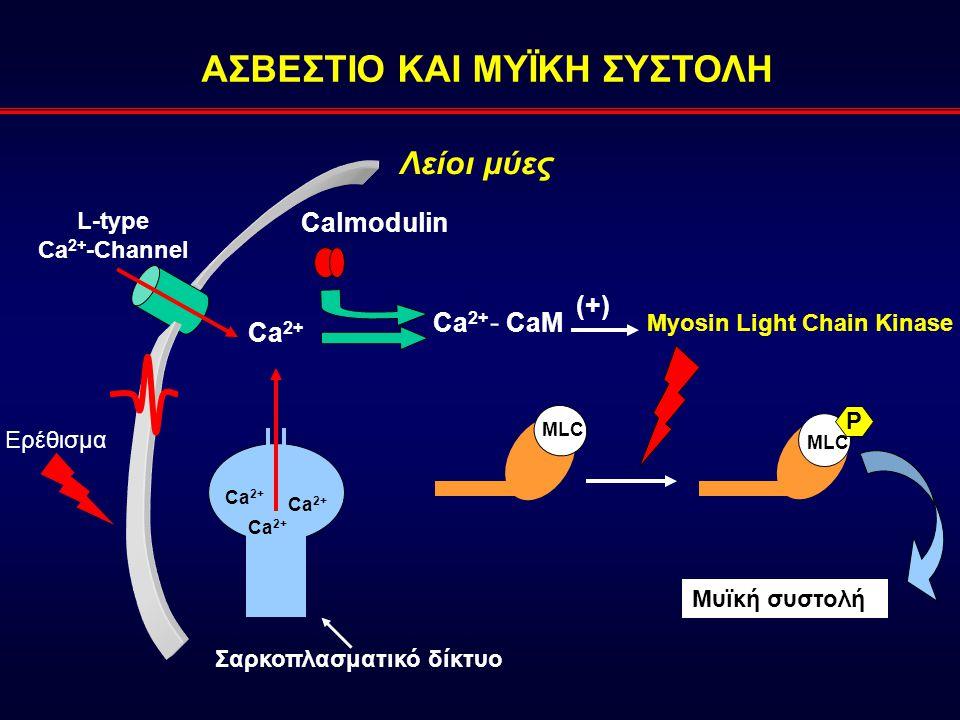 ΑΣΒΕΣΤΙΟ ΚΑΙ ΜΥΪΚΗ ΣΥΣΤΟΛΗ Λείοι μύες Ca 2+ Calmodulin Ca 2+ - CaM Myosin Light Chain Kinase (+)(+) Σαρκοπλασματικό δίκτυο Ca 2+ L-type Ca 2+ -Channel Μυϊκή συστολή MLC Ερέθισμα P
