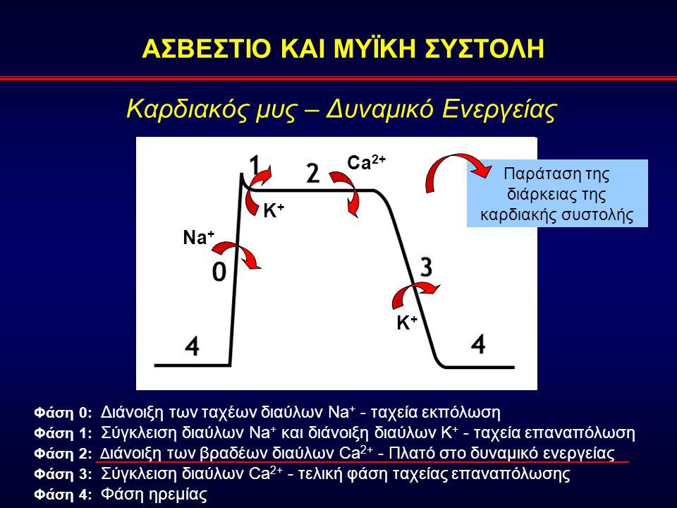 Καρδιακός μυς – Δυναμικό Ενεργείας Na + K+K+ Ca 2+ K+K+ Φάση 0: Διάνοιξη των ταχέων διαύλων Na + - ταχεία εκπόλωση Φάση 1: Σύγκλειση διαύλων Na + και διάνοιξη διαύλων Κ + - ταχεία επαναπόλωση Φάση 2: Δ ιάνοιξη των βραδέων διαύλων Ca 2+ - Πλατό στο δυναμικό ενεργείας Φάση 3: Σύγκλειση διαύλων Ca 2+ - τελική φάση ταχείας επαναπόλωσης Φάση 4: Φάση ηρεμίας Παράταση της διάρκειας της καρδιακής συστολής ΑΣΒΕΣΤΙΟ ΚΑΙ ΜΥΪΚΗ ΣΥΣΤΟΛΗ