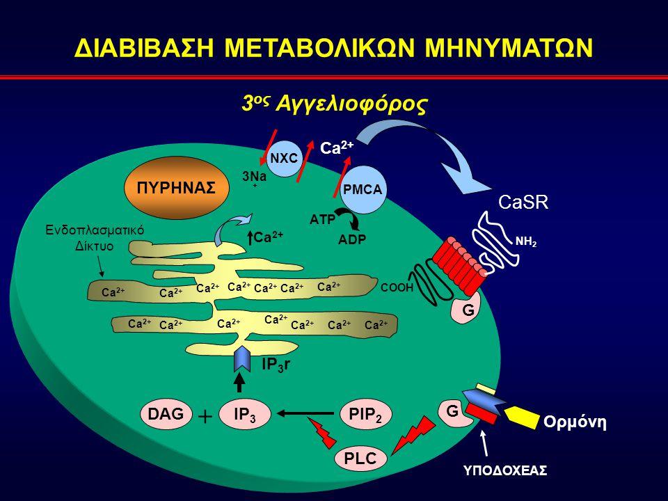 ΔΙΑΒΙΒΑΣΗ ΜΕΤΑΒΟΛΙΚΩΝ ΜΗΝΥΜΑΤΩΝ COOH NH 2 PIP 2 DAGIP 3 + IP 3 r ΠΥΡΗΝΑΣ PLC Ca 2+ Ενδοπλασματικό Δίκτυο Ca 2+ 3 ος Αγγελιοφόρος PMCA Ca 2+ ADP ATP G G Ορμόνη ΥΠΟΔΟΧΕΑΣ CaSR NXC 3Na +