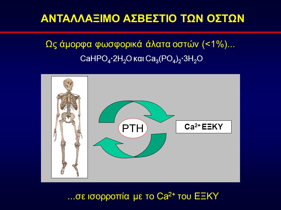 Ως άμορφα φωσφορικά άλατα οστών (<1%)... CaHPO 4 ·2H 2 O και Ca 3 (PO 4 ) 2 ·3H 2 Ο ΑΝΤΑΛΛΑΞΙΜΟ ΑΣΒΕΣΤΙΟ ΤΩΝ ΟΣΤΩΝ Ca 2+ ΕΞΚΥ...σε ισορροπία με το Ca