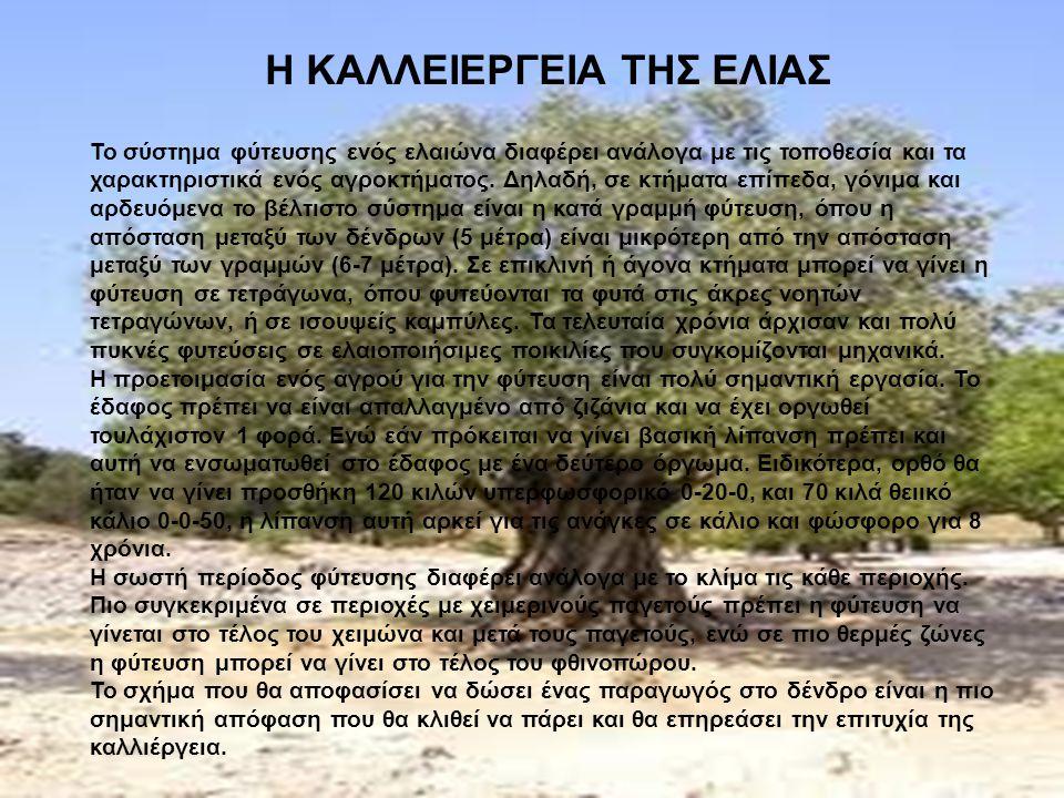 7 η Διαφάνεια: http://translate.google.gr/translate?hl=el&langpair=en%7Cel&u=htt p://www.oliveaustralia.com.au/About_Olive_Trees/about_olive_trees.