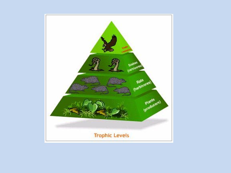 Φυτά, φυτοφάγα ζώα και σαρκοφάγα ζώα δημιουργούν μια αλυσίδα τροφής, την λεγόμενη τροφική αλυσίδα.