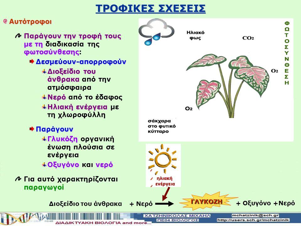ΤΡΟΦΙΚΕΣ ΣΧΕΣΕΙΣ Αυτότροφοι Παράγουν την τροφή τους με τη φωτοσύνθεσης Παράγουν την τροφή τους με τη διαδικασία της φωτοσύνθεσης: Δεσμεύουν-απορροφούν Διοξείδιο του άνθρακα Διοξείδιο του άνθρακα από την ατμόσφαιρα Νερό Νερό από το έδαφος Ηλιακή ενέργεια Ηλιακή ενέργεια με τη χλωροφύλλη Παράγουν Γλυκόζη Γλυκόζη οργανική ένωση πλούσια σε ενέργεια Οξυγόνονερό Οξυγόνο και νερό παραγωγοί Για αυτό χαρακτηρίζονται παραγωγοί Διοξείδιο του άνθρακα+ Νερό + Οξυγόνο +Νερό ΓΛΥΚΟΖΗ