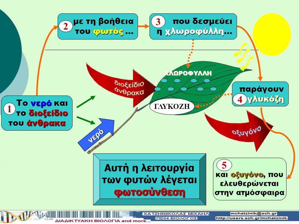 νερό Αυτή η λειτουργία των φυτών λέγεταιφωτοσύνθεση νερό Το νερό και διοξείδιο το διοξείδιο άνθρακα του άνθρακα 1 παράγουνγλυκόζη 4 με τη βοήθεια φωτός του φωτός … 2 οξυγόνο και οξυγόνο, που ελευθερώνεται στην ατμόσφαιρα 5 ΓΛΥΚΟΖΗ ΧΛΩΡΟΦΥΛΛΗ που δεσμεύει χλωροφύλλη η χλωροφύλλη… 3