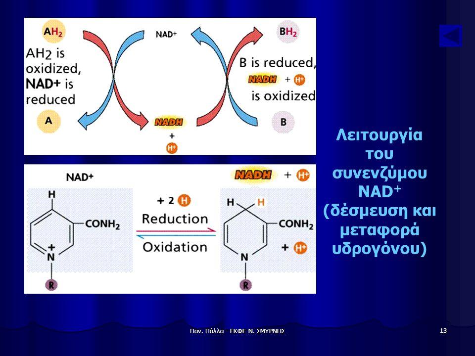 Παν. Πάλλα - ΕΚΦΕ Ν. ΣΜΥΡΝΗΣ 13 Λειτουργία του συνενζύμου NAD + (δέσμευση και μεταφορά υδρογόνου)