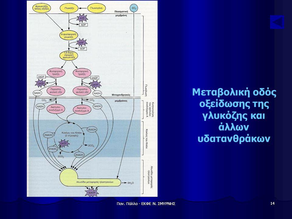 Παν. Πάλλα - ΕΚΦΕ Ν. ΣΜΥΡΝΗΣ 14 Μεταβολική οδός οξείδωσης της γλυκόζης και άλλων υδατανθράκων