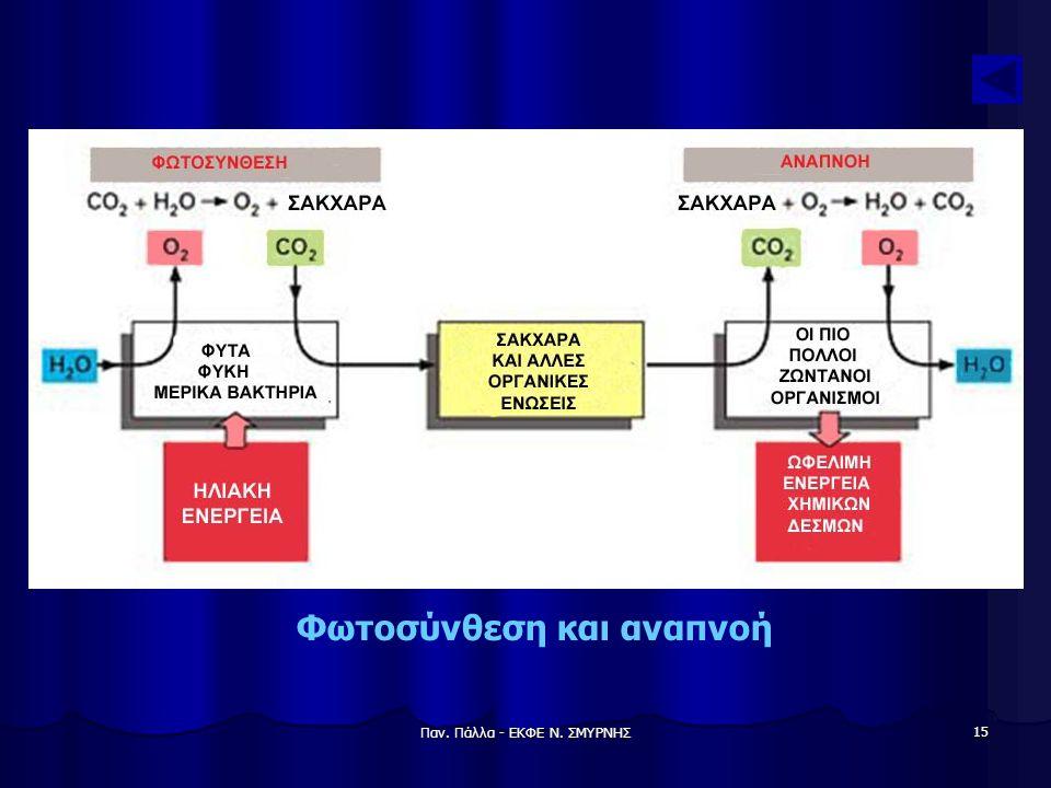 Παν. Πάλλα - ΕΚΦΕ Ν. ΣΜΥΡΝΗΣ 15 Φωτοσύνθεση και αναπνοή