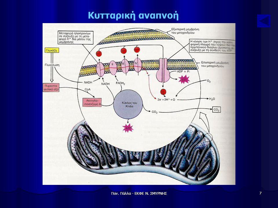Παν. Πάλλα - ΕΚΦΕ Ν. ΣΜΥΡΝΗΣ 7 Κυτταρική αναπνοή