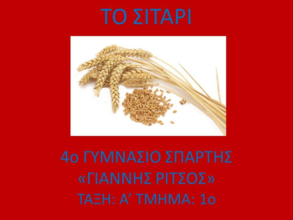 Το σιτάρι ή στάρι ή σίτος είναι ένα φυτό που καλλιεργείται σε όλο τον κόσμο.