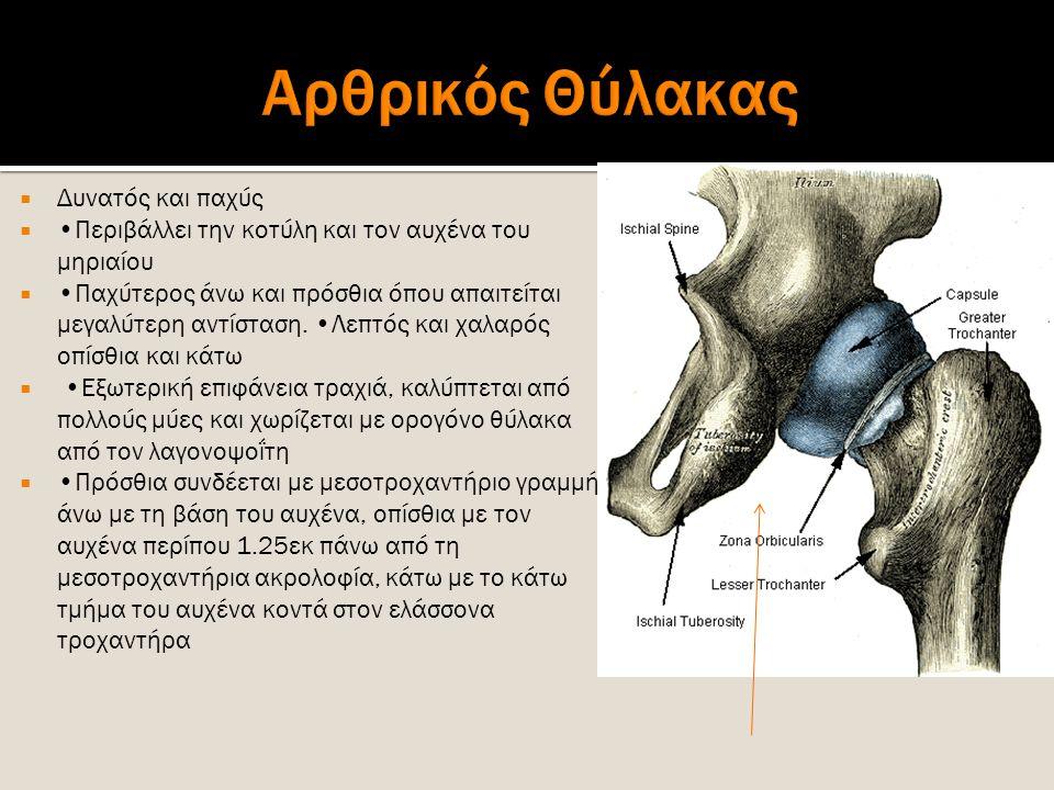  Δυνατός και παχύς  Περιβάλλει την κοτύλη και τον αυχένα του μηριαίου  Παχύτερος άνω και πρόσθια όπου απαιτείται μεγαλύτερη αντίσταση. Λεπτός και χ
