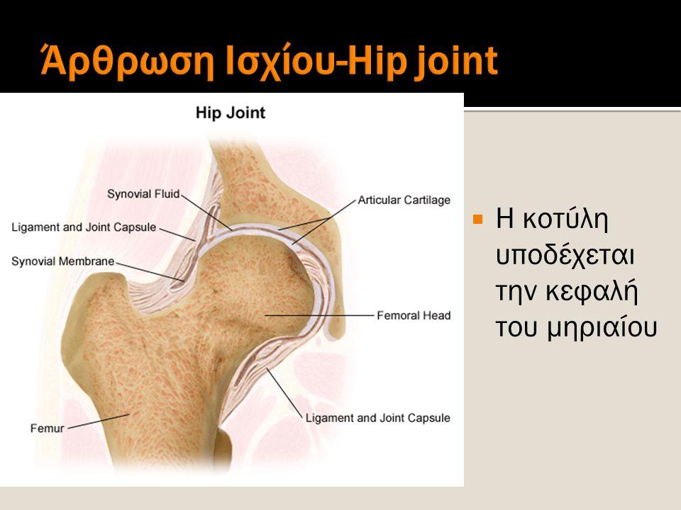 Adduction Hip Abduction shown Hip Adduction opposite