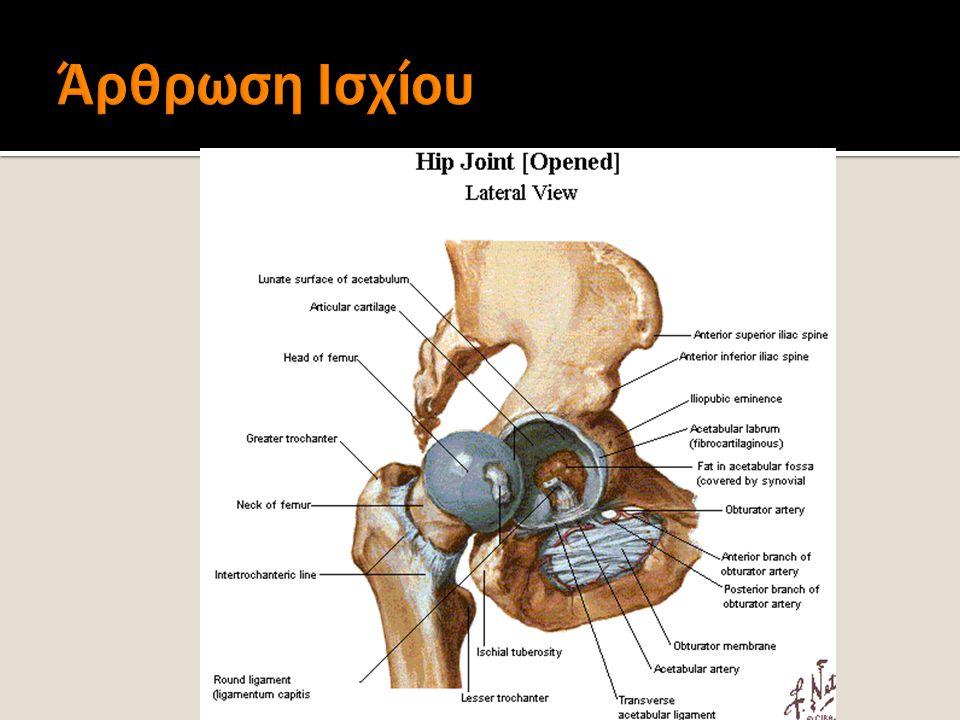  Hip (coxal) Joint  Sacroiliac Joint (SIJ)  Pubic Symphysis
