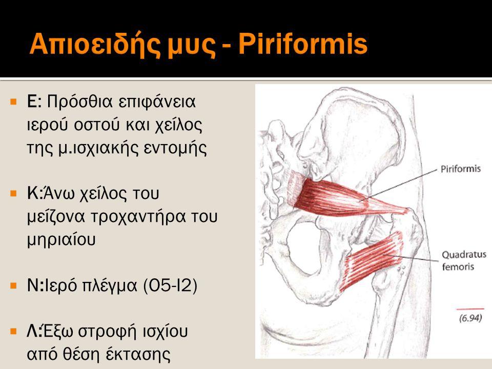  Ε: Πρόσθια επιφάνεια ιερού οστού και χείλος της μ.ισχιακής εντομής  Κ:Άνω χείλος του μείζονα τροχαντήρα του μηριαίου  Ν:Ιερό πλέγμα (Ο5-Ι2)  Λ:Έξ
