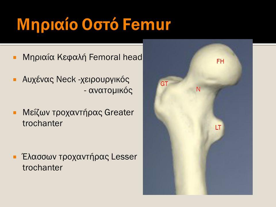  Μηριαία Κεφαλή Femoral head  Αυχένας Neck -χειρουργικός - ανατομικός  Μείζων τροχαντήρας Greater trochanter  Έλασσων τροχαντήρας Lesser trochante
