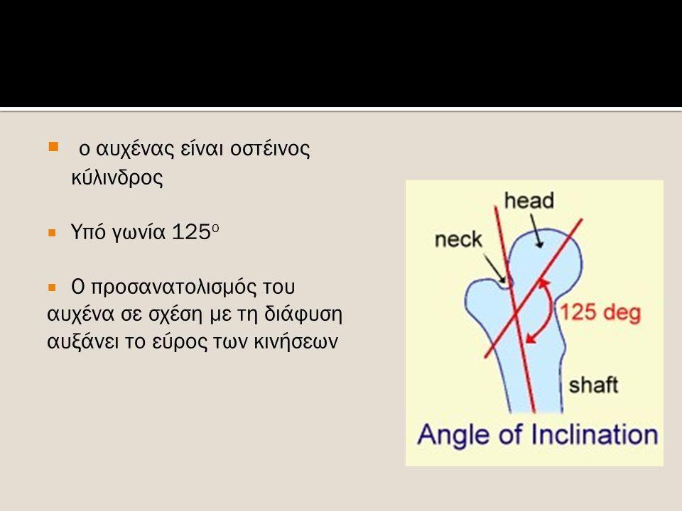  Ο μείζων τροχαντήρας φέρει το τροχαντήριο βόθρο  Και ο έλασσων τροχαντήρας βρίσκεται πιο κάτω και έχει αμβλύ κωνικό σχήμα  Από τα χείλη του μ.τροχαντήρα φέρονται η πρόσθια και οπίσθια μεσοτροχαντήρια γραμμή  Το μηριαίο παρουσιάζει 3 επιφάνειες ( πρόσθια, έσω και έξω) και τρία χείλη ( έσω,έξω και οπίσθιο)