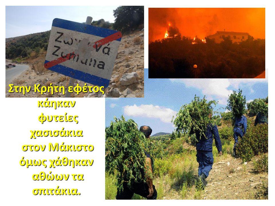 Στην Κρήτη εφέτος κάηκαν φυτείες χασισάκια φυτείες χασισάκια στον Μάκιστο όμως χάθηκαν στον Μάκιστο όμως χάθηκαν αθώων τα σπιτάκια. αθώων τα σπιτάκια.