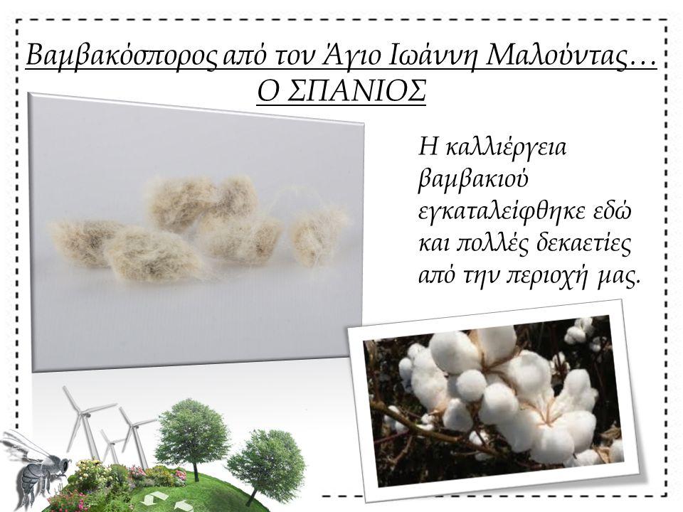 Βαμβακόσπορος από τον Άγιο Ιωάννη Μαλούντας… Ο ΣΠΑΝΙΟΣ Η καλλιέργεια βαμβακιού εγκαταλείφθηκε εδώ και πολλές δεκαετίες από την περιοχή μας.