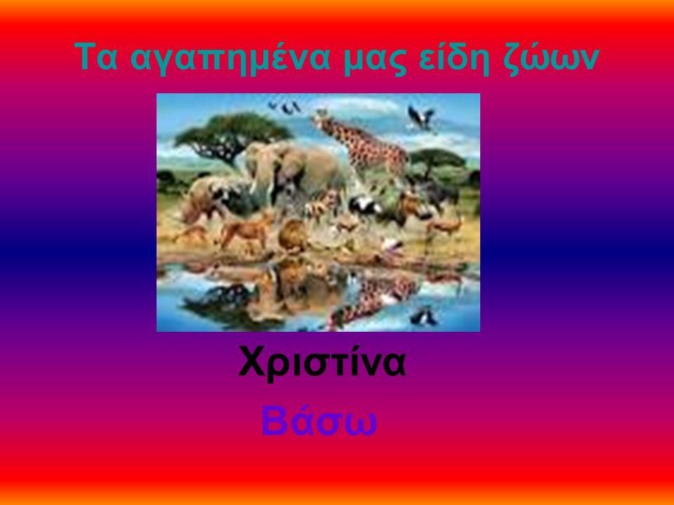 Τα αγαπημένα μας είδη ζώων Χριστίνα Βάσω