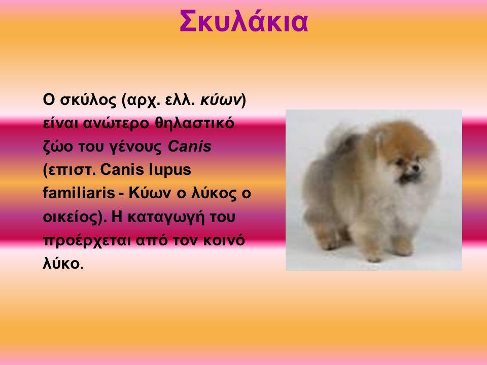 Σκυλάκια O σκύλος (αρχ. ελλ. κύων) είναι ανώτερο θηλαστικό ζώο του γένους Canis (επιστ. Canis lupus familiaris - Κύων ο λύκος ο οικείος). Η καταγωγή τ