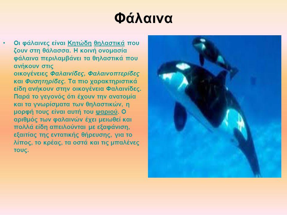 Φάλαινα Οι φάλαινες είναι Κητώδη θηλαστικά που ζουν στη θάλασσα. Η κοινή ονομασία φάλαινα περιλαμβάνει τα θηλαστικά που ανήκουν στις οικογένειες Φαλαι