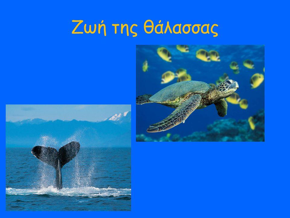 Ζωή της θάλασσας