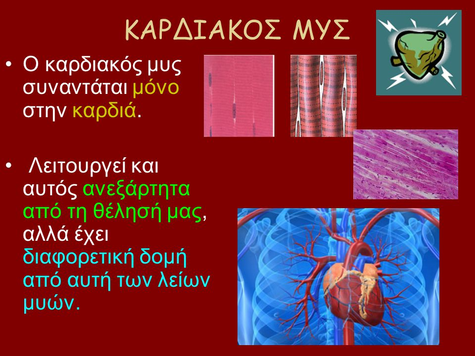 ΚΑΡΔΙΑΚΟΣ ΜΥΣ Ο καρδιακός μυς συναντάται μόνο στην καρδιά. Λειτουργεί και αυτός ανεξάρτητα από τη θέλησή μας, αλλά έχει διαφορετική δομή από αυτή των