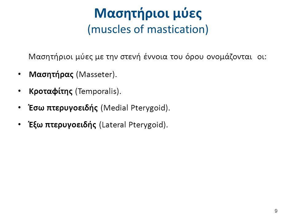 Μασητήριοι μύες με την στενή έννοια του όρου ονομάζονται οι: Μασητήρας (Masseter).