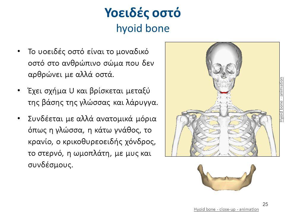 Το υοειδές οστό είναι το μοναδικό οστό στο ανθρώπινο σώμα που δεν αρθρώνει με αλλά οστά.