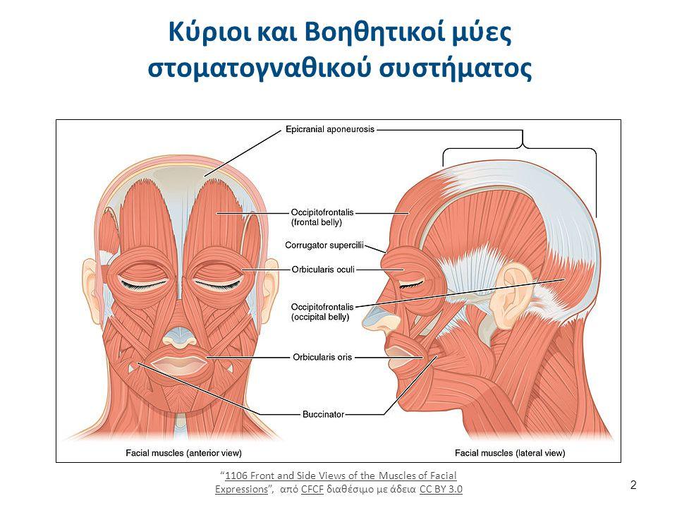 Κύριοι και Βοηθητικοί μύες στοματογναθικού συστήματος 1106 Front and Side Views of the Muscles of Facial Expressions , από CFCF διαθέσιμο με άδεια CC BY 3.01106 Front and Side Views of the Muscles of Facial ExpressionsCFCFCC BY 3.0 2